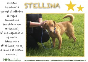 Stellina (2)