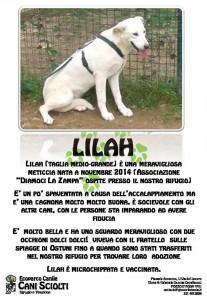 appello lilah (2)
