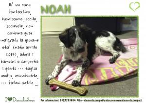 NOAH-1 (2)