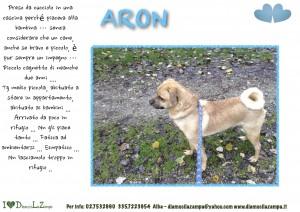 ARON (2)