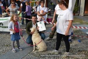 11-cani simpatia Pandino 255